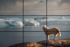 Greenland-Husky-Rule-of-Thirds
